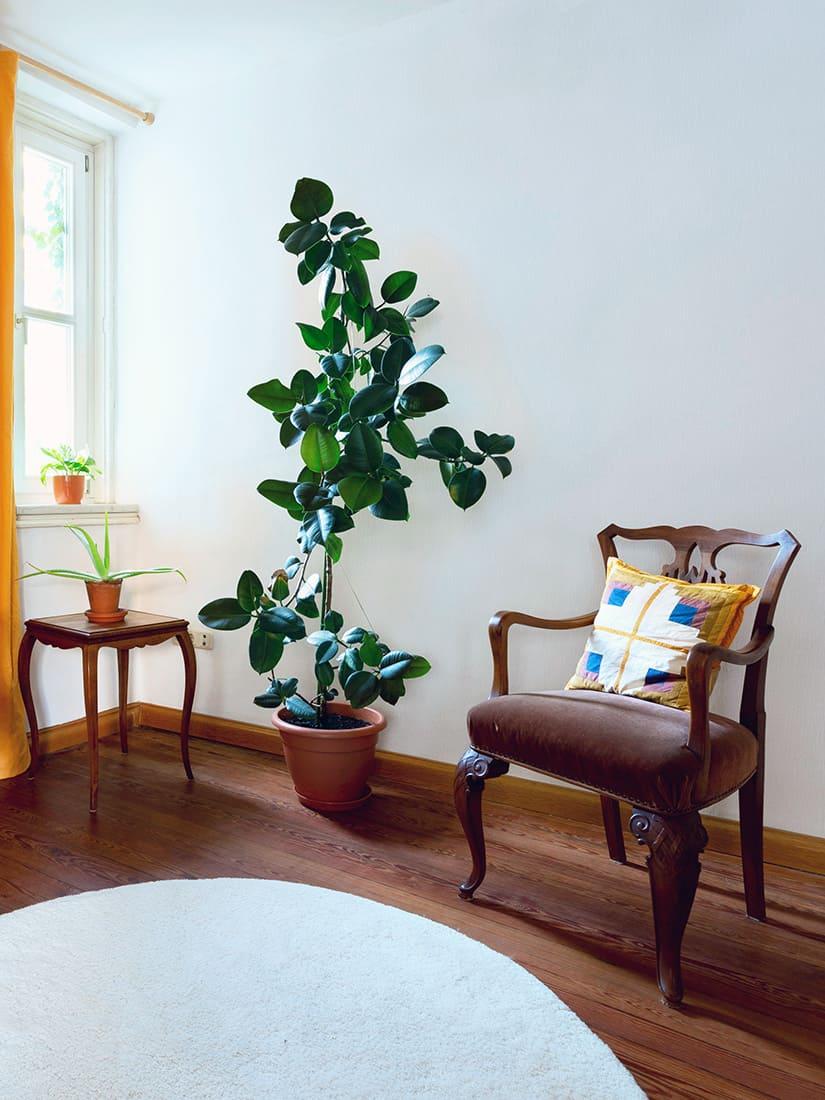 Der Behandlungsraum des Osteopathen Christian Kästle. Man sieht einen Stuhl, den Teppich, den Holzboden, eine Pflanze und ein Tisch in der Ecke